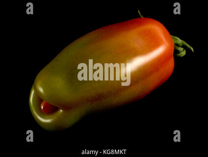 Genetically modified tomato - Stock Image