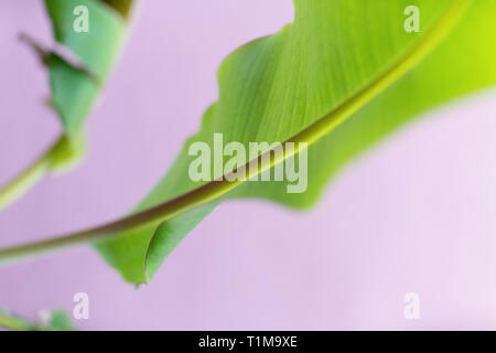 Close up vibrant green leaf and stem - Stock Image