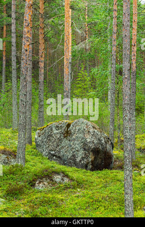 Big rock in forest landscape in Finland - Stock Image