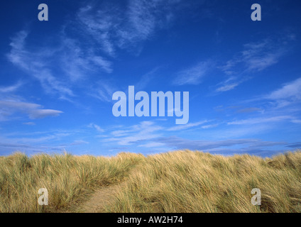 Yellow Sand Dunes and bright blue sky, West Sands Beach, St Andrews, Fife, Scotland - Stock Image