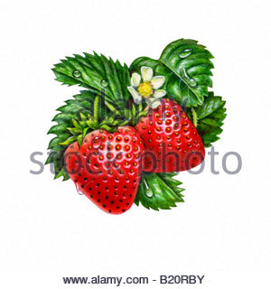 Strawberries and leaves - Stock Image