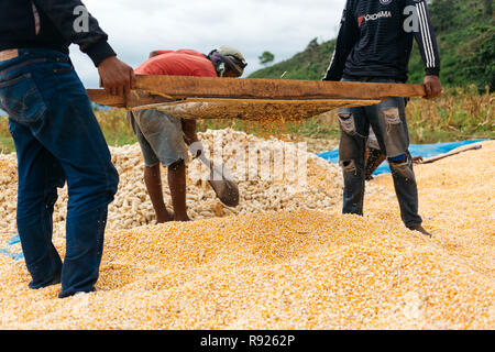 Male workers sifting heaps of corn, Kuta, Lombok, Indonesia - Stock Image