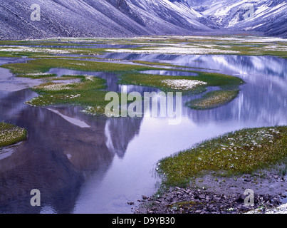 Early August snow accenting cottongrass meadow ponds surrounded limestone peaks Endicott Mountains Brooks Range - Stock Image