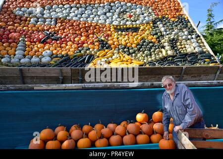 Slindon Village, West Sussex, UK. 29th September 2018. Annual Pumpkin Display Robin Upton stands in front of his pumpkin display, opening next week, which this year commemorates the hundredth anniversary of the RAF, the centenary of the Armistice and his familys 50 years of growing pumpkins. It runs from October to November (peaking around Halloween) and comprises of around 100 different varieties of pumpkin and squash.Credit Gary Blake/Alamy Live News - Stock Image