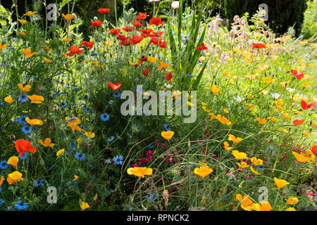 A garden bed with profusely flowering mixed annual flowers - Stock Image