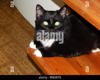 Black cat lives and plays in the apartment. - Stock Image