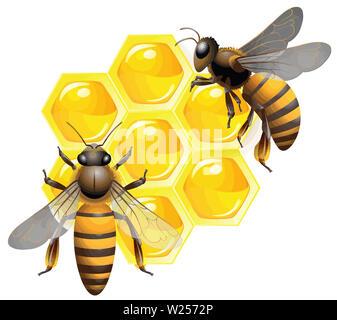 beehive honeycomb bee food   honey  natural illustration  yellow - Stock Image