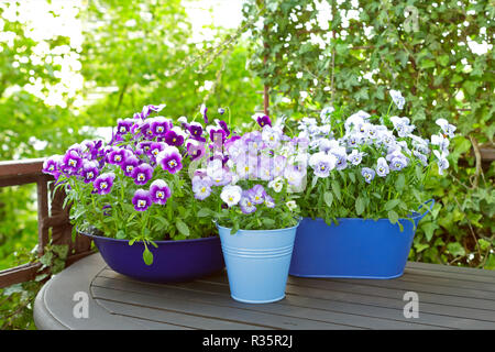 Purple, blue and violet pansy flowers in two pots and a bowl on a wooden balcony table in spring, copy or text space - Stock Image