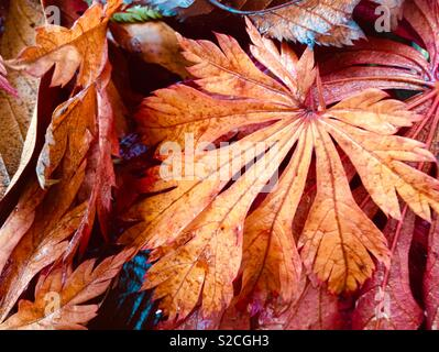 Fallen autumn leaves. - Stock Image