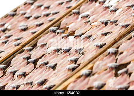 carapau seco da Nazaré, Portugal - Stock Image