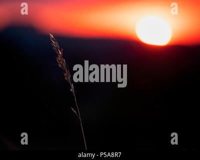 Ashbourne, Derbyshire, UK. 26th June, 2018. UK Weather: spectacular sunset over wild grass meadow in Ashbourne Derbyshire, Peak District National Par Credit: Doug Blane/Alamy Live News - Stock Image