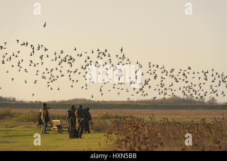Birdwatchers watching a flock of red knot (Calidris canutus) leaving high tide roost at Snettisham RSPB reserve, - Stock Image