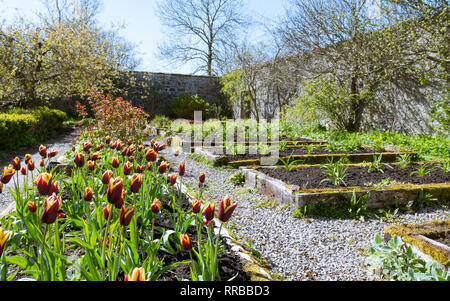 Applecross Walled Garden and Potting Shed Cafe and Restaurant in spring, Strathcarron, North West Highlands, Scotland, UK - Stock Image