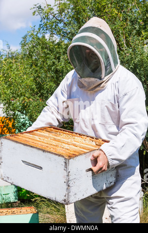 Male Beekeeper Carrying Honeycomb Box At Apiary - Stock Image
