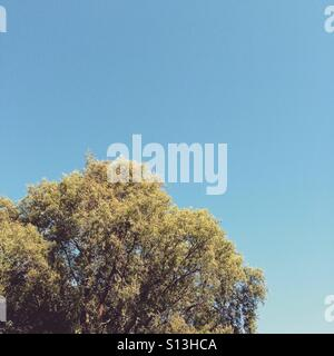 Summer sky - Stock Image