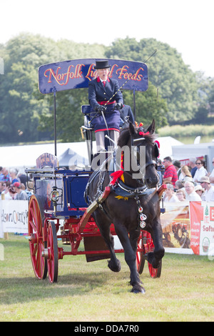 A traditional supply cart and shire horse performing at a county show in England - Stock Image
