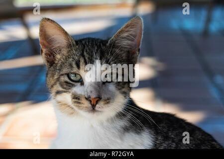 Portrait of tabby cat kitten - Stock Image