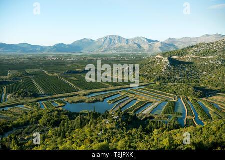 Kroatien, Dalmatien, Ploce, Landwirtschaft im Neretva-Delta - Stock Image