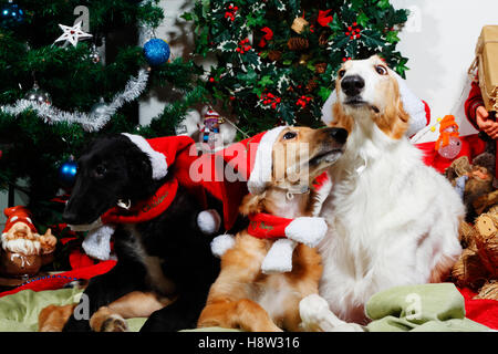 Puppies dressed as father-christmas with greetings - Stock Image