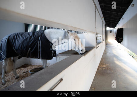 White Lusitan Horse in the stables of the Torre de Palma wine hotel - Stock Image