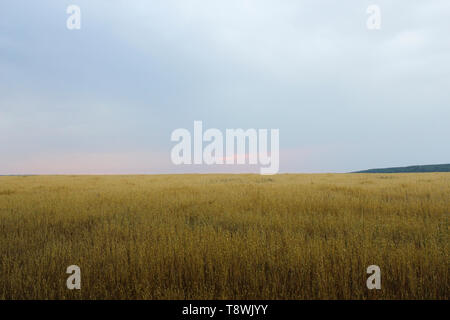 Landscape with a view of the endless field in cloudy weather - Stock Image