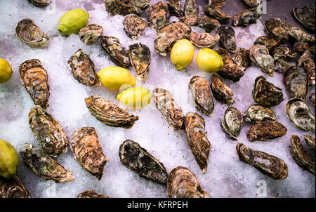 Oyster in market - Stock Image