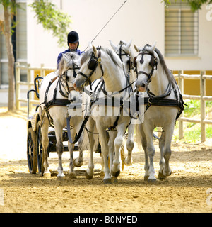 Horse drawn carriage at Yeguada de la Cartuja stud, Jerez, Andalucia, Spain - Stock Image