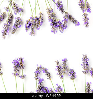 A square frame of blooming lavender flowers on a white background with copy space - Stock Image