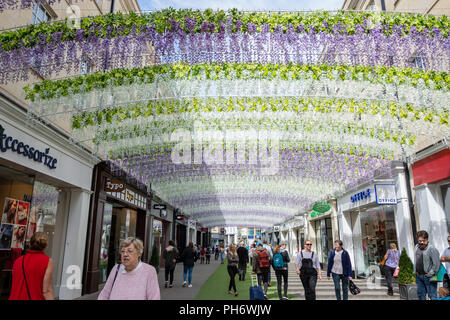 A view of the Wisteria flower arches on St Lawrence street, part of the Southgate shopping complex in the city of Bath - Stock Image