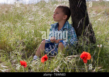 contemplative little boy sitting under tree in field of poppies - Stock Image