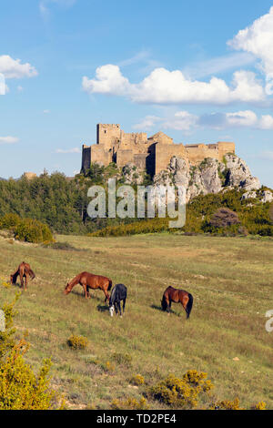 Horses in field in front of Loarre castle, near Loarre, Huesca Province, Aragon, Spain.  The Romanesque castle is amongst Spain's oldest, dating mostl - Stock Image
