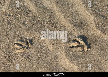 Bird tracks in the sand at Surf Beach near Lompoc, central California coast. Digital photograph - Stock Image