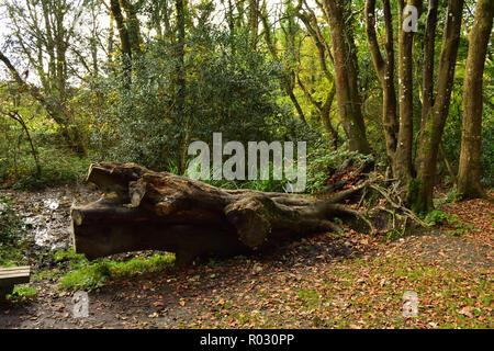 British Woodland in Autumn - Stock Image