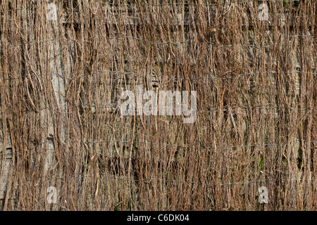 Birch twig mat texture or background image. - Stock Image