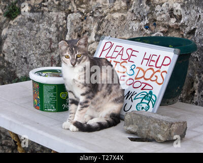 Reaching out for food help to stray dogs and cats in the Turkish Cypriot town Girne ( Kyrenia) - Stock Image