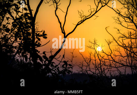 Sun rising in Bandhavgarh National Park, Madhya Pradesh India - Stock Image