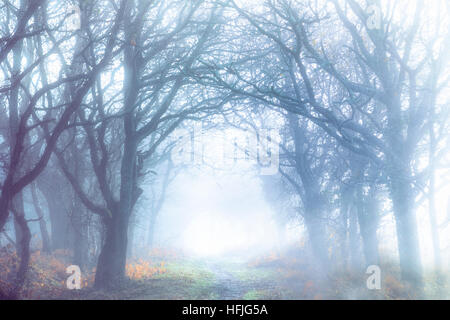 trees in the fog - Stock Image