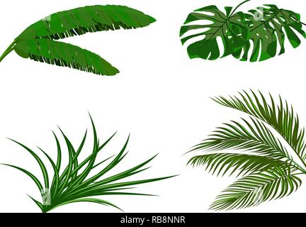 Set. Green leaves of banana, coconut , monstera and ogawa. Tropical theme. Colorful graphic design for print, picture or postcard. illustration - Stock Image