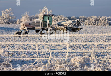 Winter Frost Saskatchewan Canada ice storm fence - Stock Image