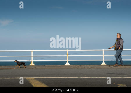 Aberystwyth Wales UK. 13 April 2019. UK Weather: A man  walking his dog  on the promenade on a  bright snd sunny  April springtime morning with clear blue skies  but  a cold easterly wind blowing  in Aberystwyth on the Cardigan Bay coast of west Wales.