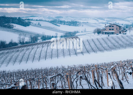 Padan Plain, Castelvetro Vineyards in Snow. Emilia Romagna, Italy - Stock Image