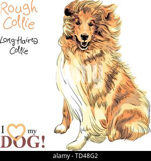 dog Rough Collie breed vector - Stock Image