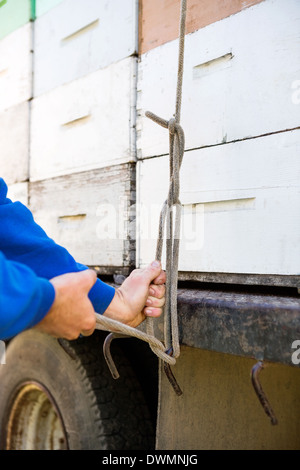 Beekeeper Tying Stacked Honeycomb Crates On Truck - Stock Image