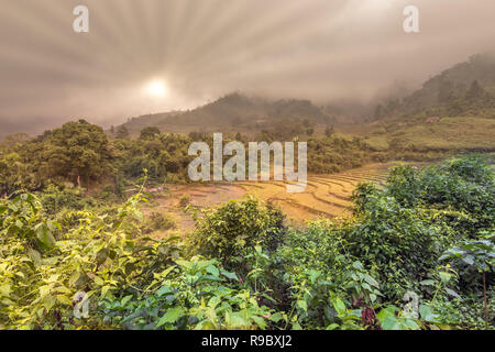 winter vegetation and empty rice paddy afer harvest in Vietnam, sun through mist in green mountains in Asia - Stock Image