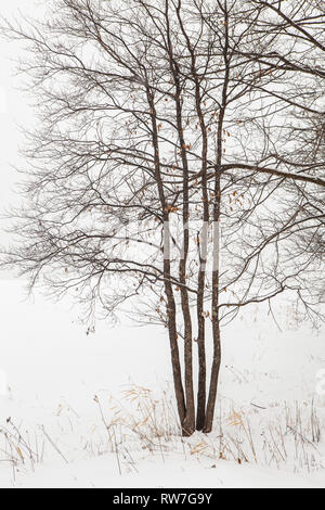 Bare Tree with Few Dangling Leaves and Tall Grasses Covered in Snow - Stock Image