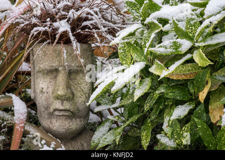 Garden pot with ornamental grass Uncinia Rubra Red Hook Sedge, in winter conditions. Evergreen Laurel and Phormium - Stock Image