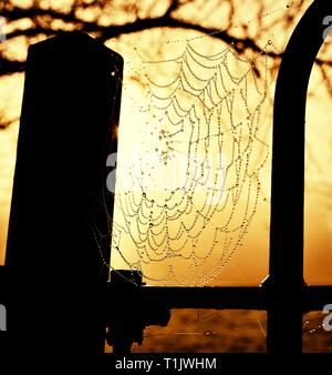 A cobweb at morning sunrise,with early morning dew,water droplets,golden hour light,park gate. Glebe park,Bowness on Windermere,Lake District,Cumbria, - Stock Image