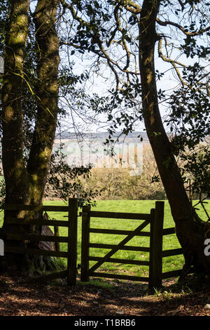 Walkers gate between trees into a field near Colyton, Devon. - Stock Image
