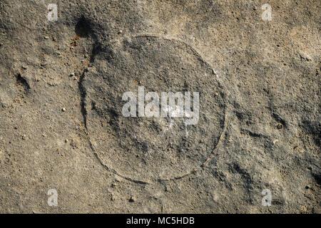 Photo of dinosaur fossils (eggs) captured Balasinor fossil park, Gujarat,India. - Stock Image