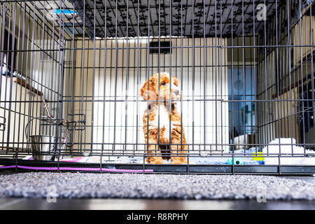 Dog in cage, puppy in cage, dog in crate, puppy in crate, puppy crate, dog crate, puppy cage, puppy crate, caged dog, puppy farm, puppy farming, dog - Stock Image